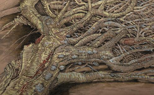 root system illustration
