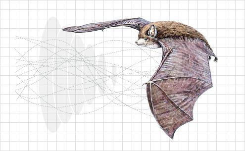 Illustration of a bat