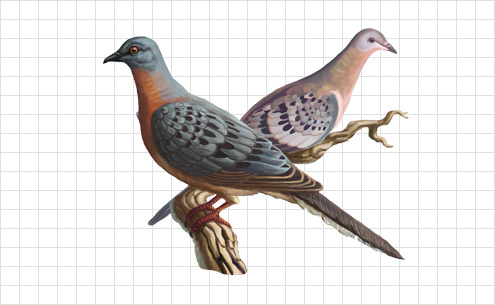 Illustration of pigeons