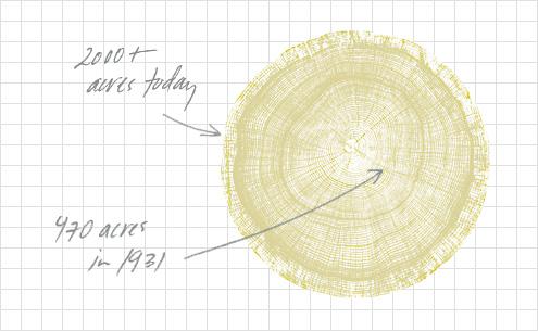 Illustration of tree rings